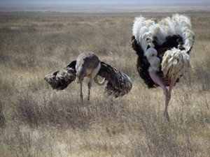 Gina Schreck, Kilimanjaro, safari, Ngorongoro