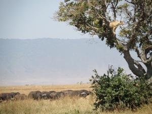 Gina Schreck, Kilimanjaro, Ngorongoro, Safari