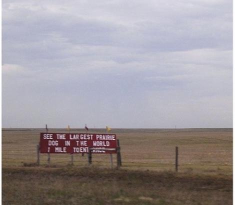 Gina Schreck Worlds largest prairie dog between Colorado and Kansas